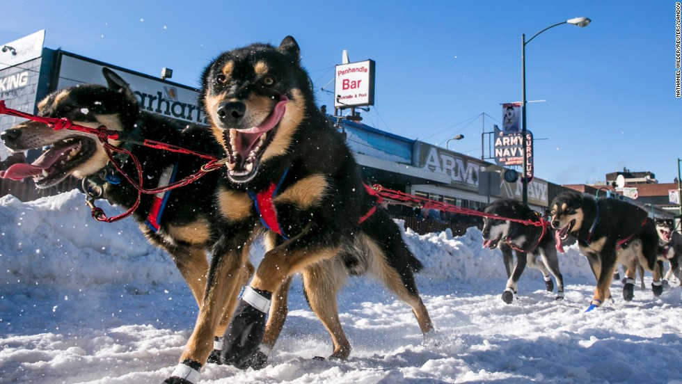 Dogs race for Jason Mackey during the ceremonial start to the Iditarod dog sled race Saturday, March 1, in Anchorage, Alaska.