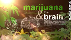 Your brain on marijuana