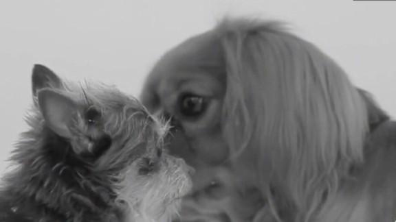 mxp first kiss parody dog video_00001025.jpg