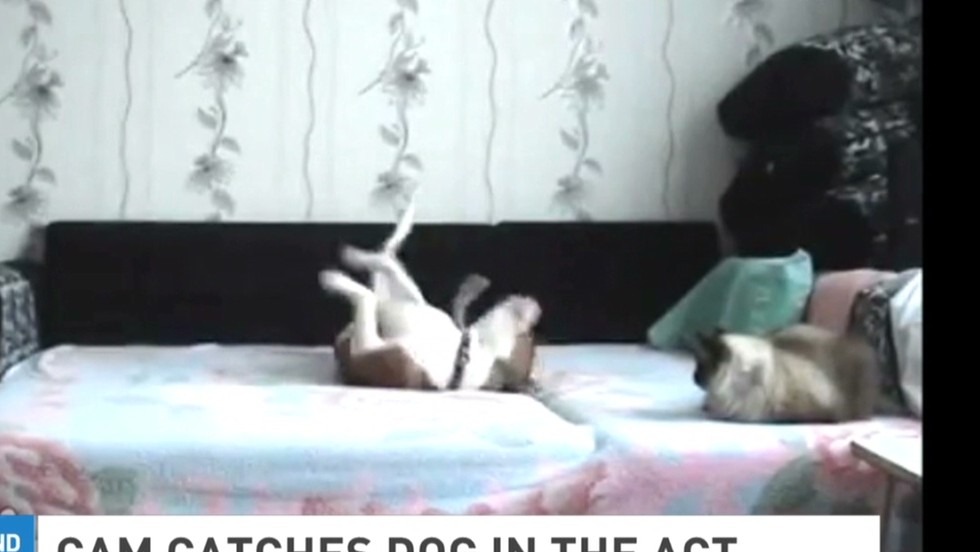 Video dog i caught on a hidden camera wife-16515
