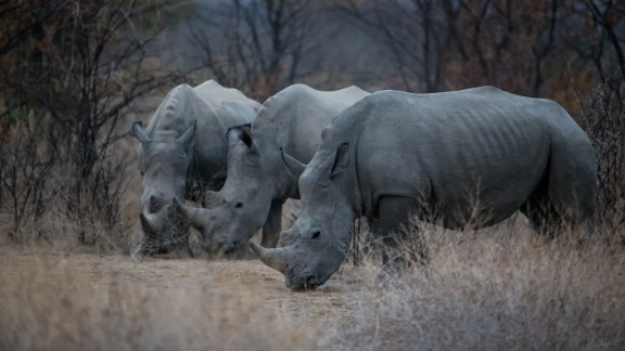 """Globally there were 12 million wildlife tourism trips in 2013 (the last full year of data available), and numbers are rising 10% annually, suggesting positive signs for the industry -- should it counter the existential threats to it, such as """"the dramatic increase in poaching and illicit trade of wildlife products since 2005,"""" which """"threatens to undermine conservation achievements,"""" according to UNTWO."""