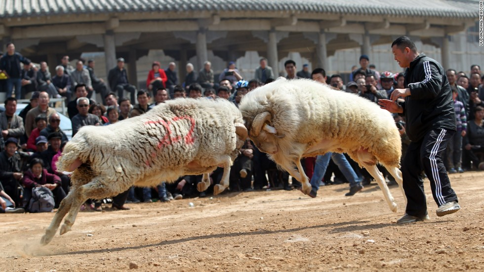 Two rams tussle at a fair in Haoshantou Township, China, on Saturday, March 22.