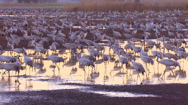 Millions of birds migrate in Galiliee