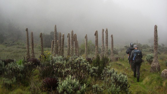 """The Ruwenzori range, known as the """"Mountains of the Moon,"""" straddle the border of Uganda and DR Congo. They are home to many rare plant species."""
