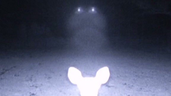 dnt trail camera ufo sighting _00003727.jpg