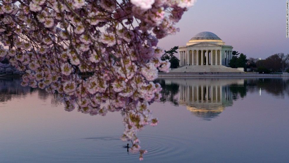 Cherry trees and the Thomas Jefferson Memorial are seen in Washington as the sun rises on Thursday, April 10.