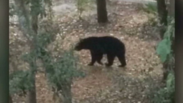 Bear drags woman from garage