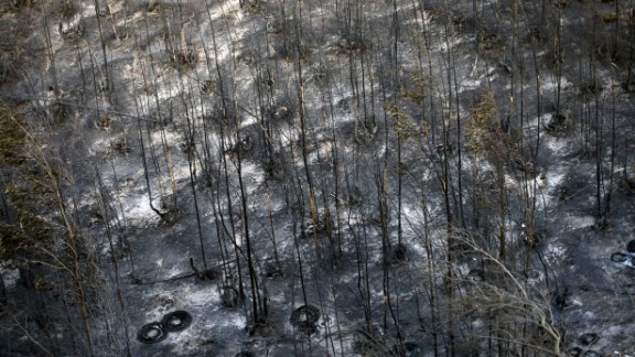 Charred trees are all that remains of a green space in Valparaiso on April 13.