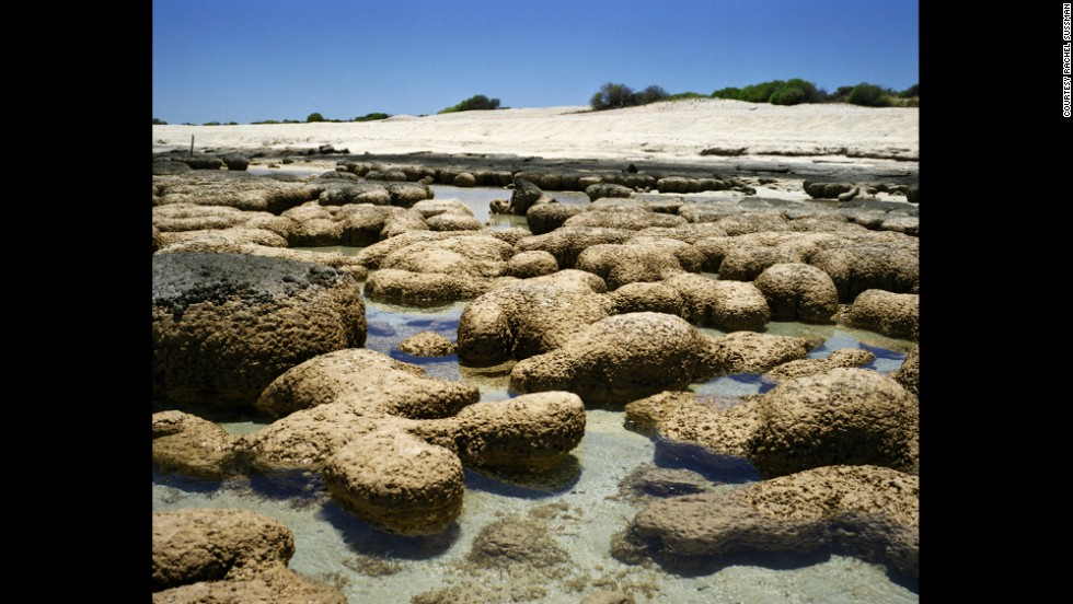 Stromatolites. 2,000 to 3,000 years old. Carbla Station, Western Australia.