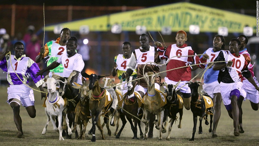 Goats and their jockeys jostle for position in a race Monday, April 21, in Tobago. The event is part of the island's annual Easter celebration.