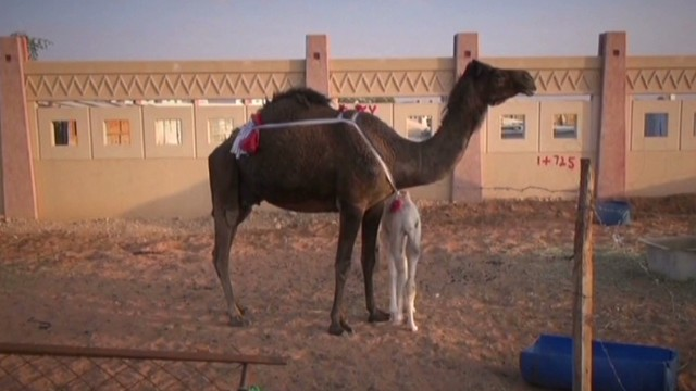 Gupta: MERS outbreak linked to camels