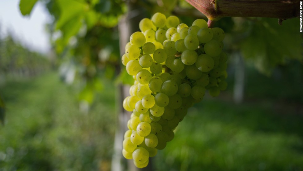 "Grapes moved down this year from fifth to sixth, according to the report. Since 2004, the Environmental Working Group -- a nonprofit, nonpartisan environmental organization -- annually ranks pesticide contamination in 47 popular fruits and vegetables for its <a href=""https://urldefense.proofpoint.com/v2/url?u=https-3A__www.ewg.org_foodnews_&d=DwMGaQ&c=W8uiIUydLnv14aAum3Oieg&r=IHEPXqOw2AIPPUKrXA55jpDGJainogheTJcbl13p2n4&m=cCkEhSLzBxQh8vXWgmPfB7tRm9sDK2pgRAKkqgv6_WA&s=savWwGIECw1HOPfjHzQM62P9ElWRsM7LOT24dr_G0CQ&e="" target=""_blank"">Shopper's Guide</a>."