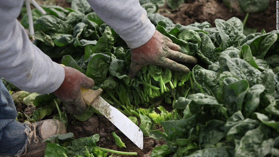 Spinach, in the second spot this year, had relatively high concentrations of a neurotoxic or brain-damaging insecticide.<br />Overall, 97% of spinach samples contained pesticide residues.