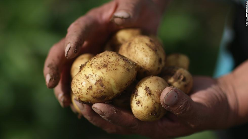 Potatoes can be poisonous, particularly when they have sprouted or are green in color.