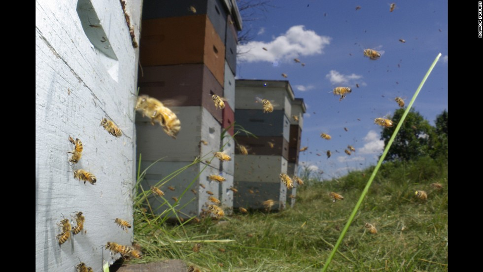 "<strong>""Vanishing of the Bees""</strong> (2009) -- This documentary looks into the dwindling population of honey bees around the world. (Netflix)"
