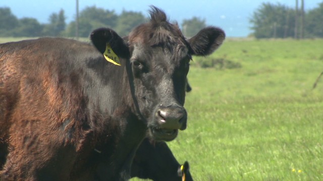 Rancher: No way our beef was tainted