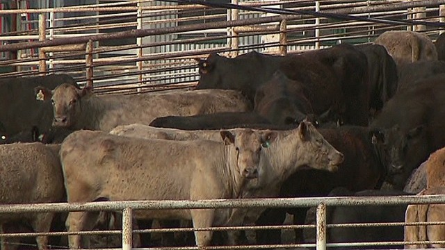 Affair at meat plant under investigation