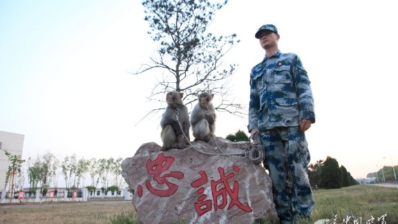 The People's Liberation Army Air Force has trained macaques to keep troops safe by discouraging birds from nesting near the air force base.