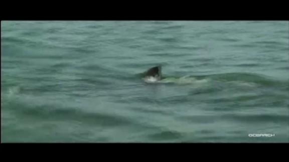 dnt fl tracking great white sharks_00000005.jpg