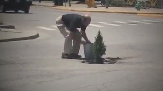 Man Plants Tree In Pothole