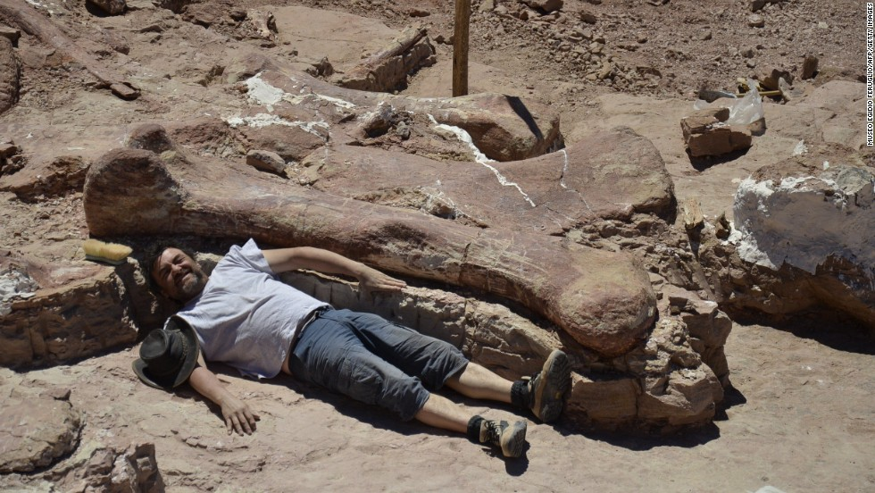 A technician poses next to a dinosaur fossil, thought to be a new species of Titanosaur, and likely to be the largest ever to roam the earth. The discovery was made in remote Chubut, Argentina, about 800 miles south of Buenos Aires.