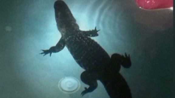 pkg wwsb florida gator pool_00011825.jpg