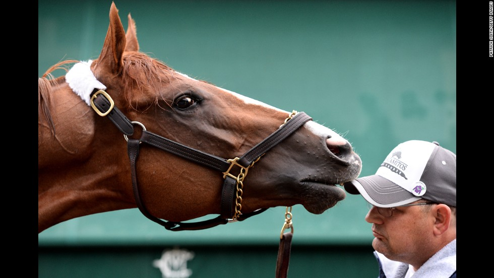 California Chrome is seen Thursday, May 15, two days before he went on to win the Preakness Stakes in Baltimore. The horse is now two-thirds of the way to what would be the first Triple Crown winner since Affirmed in 1978.