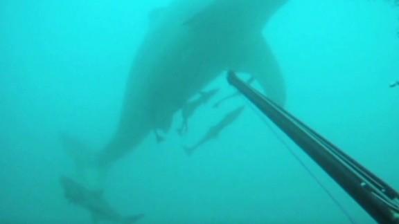 ac intv roseman diver fights shark _00030005.jpg