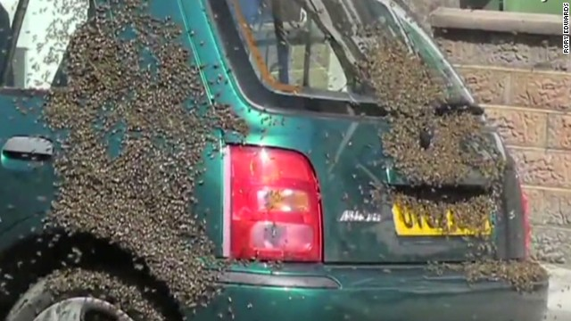 Beekeeper removes 20,000 bees from car