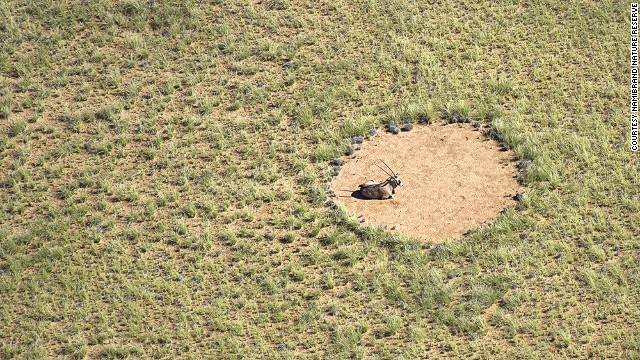 Namibia's 'fairy circles': Nature's greatest mystery?