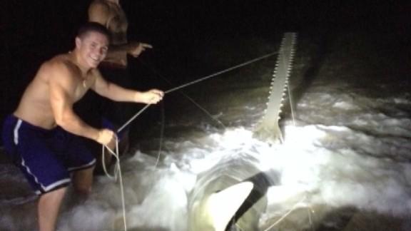 dnt fl rare large sawfish captured_00005321.jpg