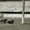 RESTRICTED 1950 world cup goal