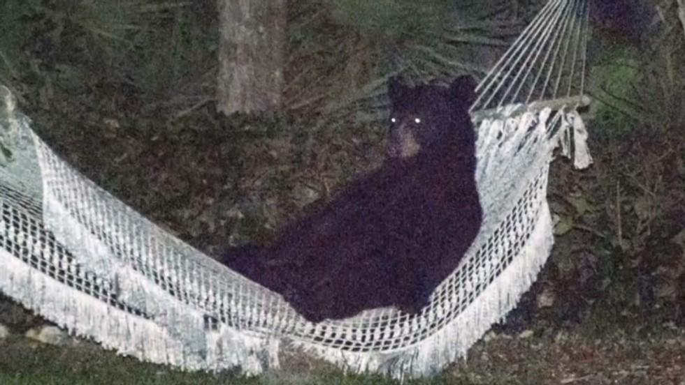 black bear enjoys repose in a hammock in daytona beach neighborhood   cnn black bear enjoys repose in a hammock in daytona beach      rh   cnn