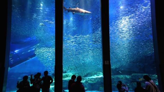 25. Yokohama Hakkeijima Sea Paradise in Japan features amusement park rides, an aquarium and over 500 varieties of fish.