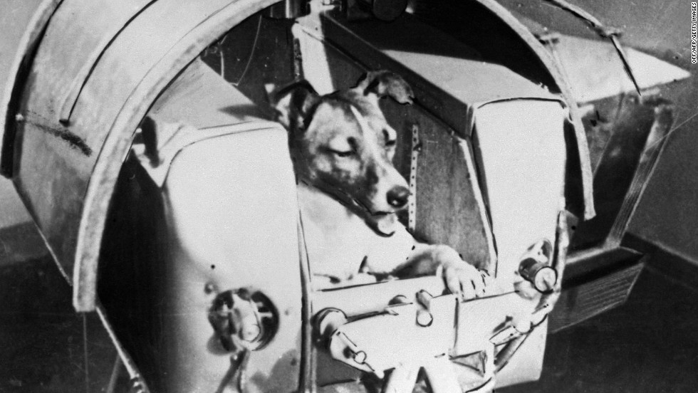 A stray dog from Moscow named Laika was the first living creature ever to be sent into space.  First appearing in the Soviet daily Pravda in 1957, this photo shows Laika on the Sputnik II.