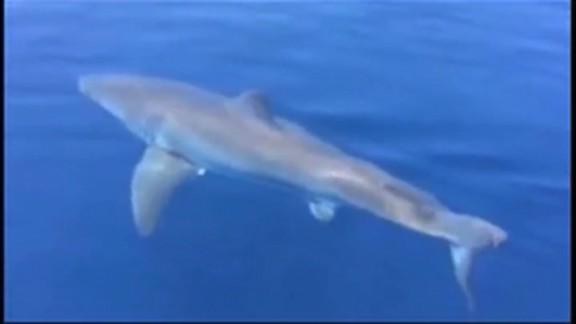 fl dnt wptv shark_00003718.jpg
