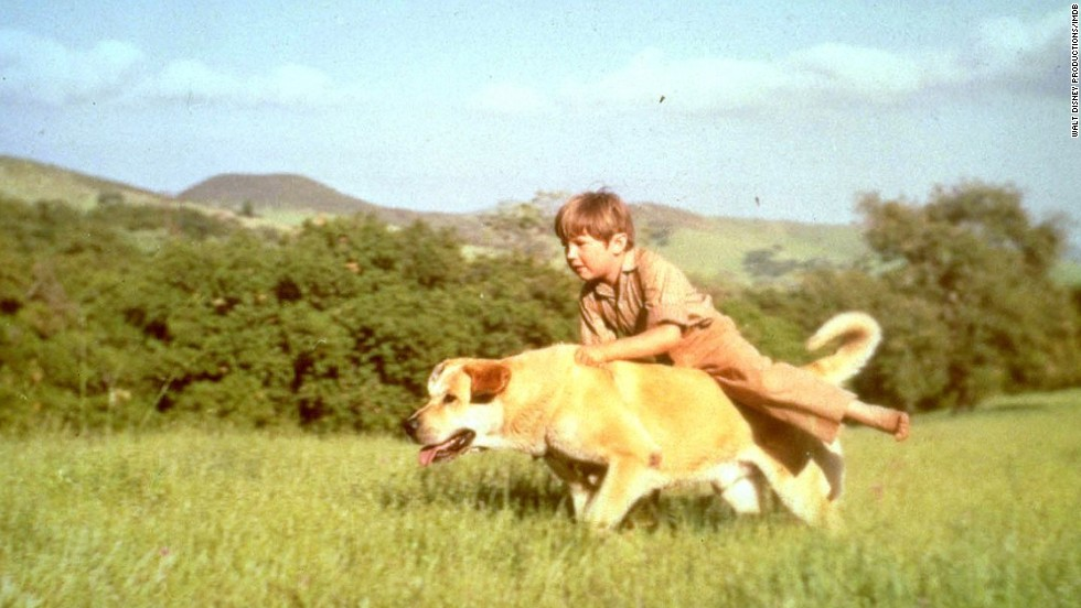 "<strong>""Old Yeller"" (1957)</strong>: In the era of ""Lassie,"" Old Yeller was America's <em>other </em>favorite dog, and was the epitome of the tough decisions we have to face as we move out of childhood. We understand that Old Yeller had to be put down, but no, we're still not over it. (Yeller's best friend was played by Kevin Corcoran.)"