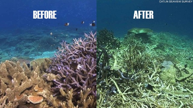 The same section of coral reef is shown before and after the devastating effects of Cyclone Ita, a category five tropical cyclone, which hit the region in April.
