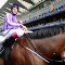 royal ascot leading light
