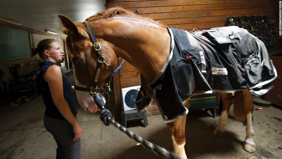 This is one example of a magnetic rug used in equine therapy. The latest blankets extend all the way up the horse's neck and even come with a set of four boots.