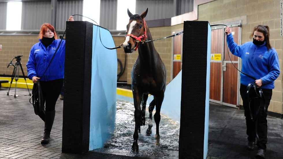 This racehorse, at Jonjo O'Neill's Jackdaws Castle stables in Cheltenham, has just finished a session in the equine pool.