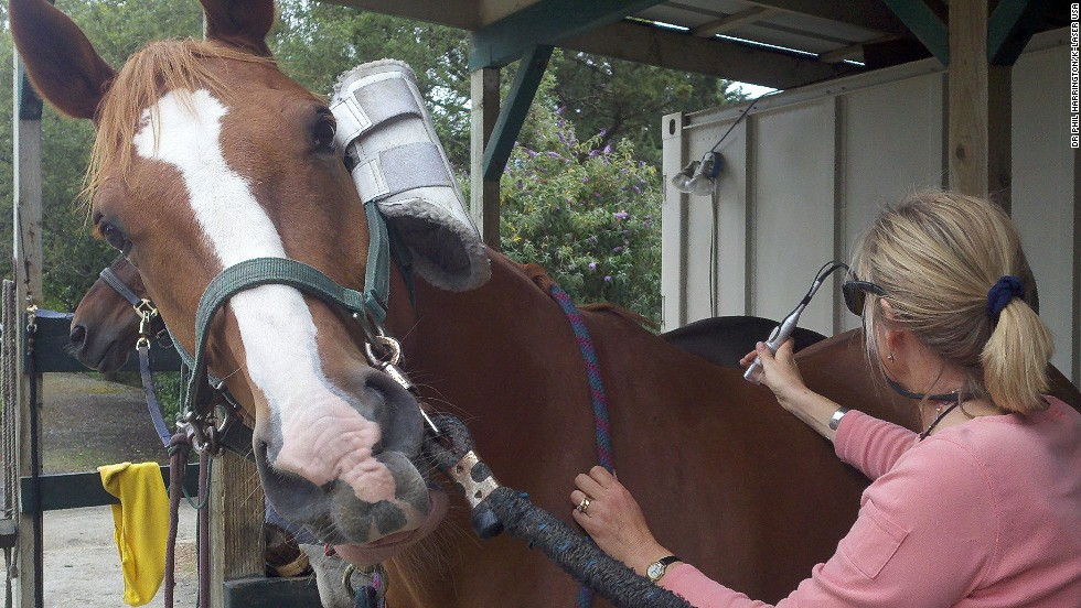 Here, a horse receives tissue therapy with the help of a handheld laser. Lasers come in different strengths and work to stimulate the recovery of muscle tissue, affecting individual cells.