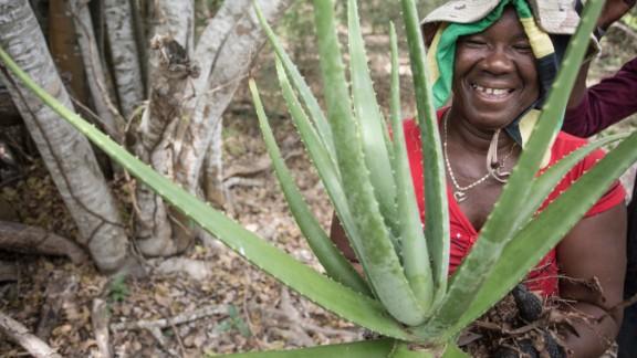 Paulette Coley holds up an aloe plant, abundant on the Goat Islands.