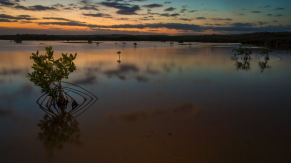 Mangrove trees are reflected in a lagoon at sunset in the Portland Bight Protected Area.