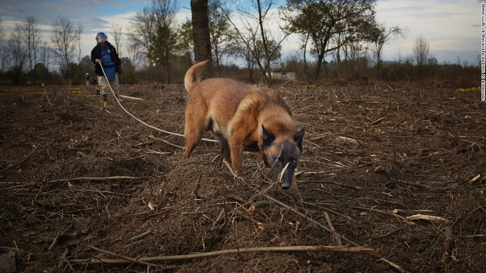 A deminer from Norwegian People's Aid, a humanitarian organization, uses a dog to locate mines in Grebnice, Bosnia.