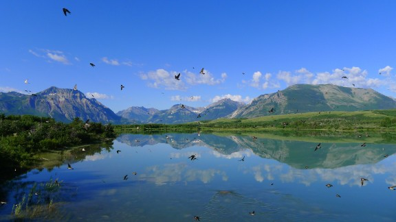 "Susan Moore stopped to capture the view at Waterton Lakes National Park in Alberta when hundreds of swallows swooped in. ""I loved the chaotic motion of the birds in combination with the tranquil reflection of the mountains,"" she said."