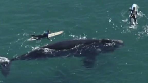 pkg surfers giant whale australia_00002706.jpg