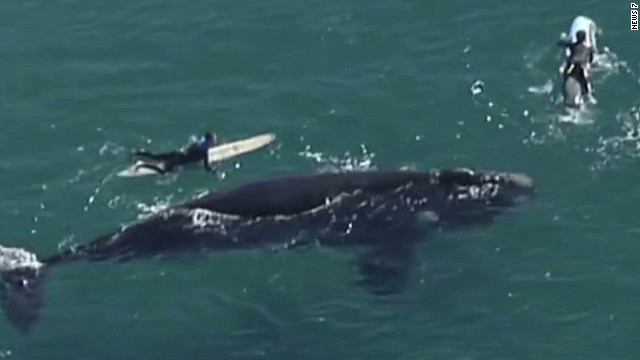 Surfers come within feet of giant whale