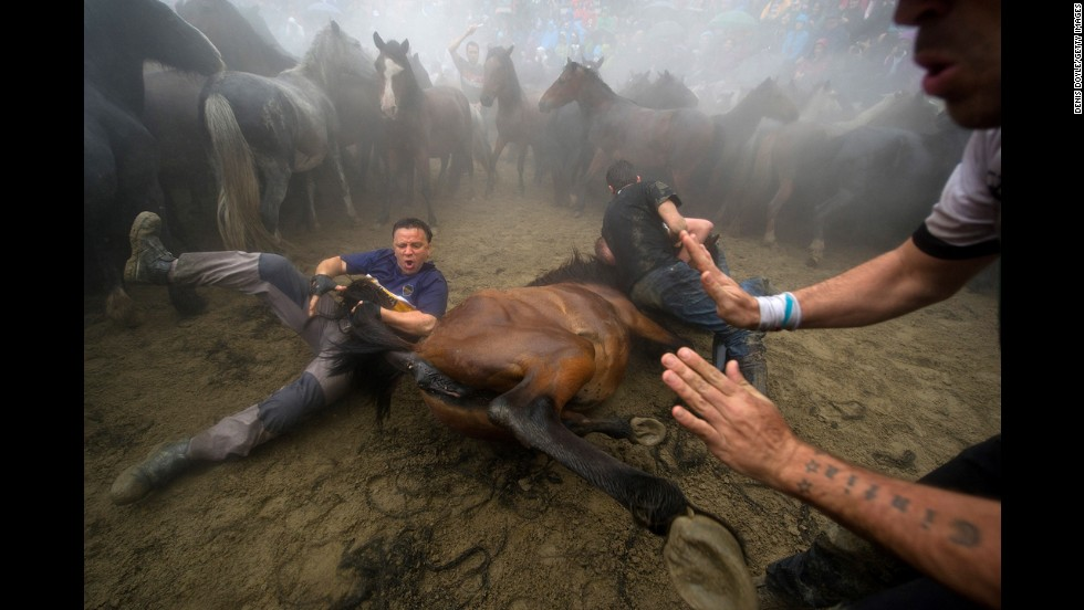 Men take down a wild horse Saturday, July 5, during the Rapa das Bestas, or shearing of the beasts, in Sabucedo, Spain. During the four-day festival, wild horses are rounded up and wrestled to the ground to have their manes and tails sheared.