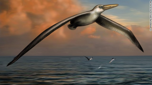 This image shows a reconstruction image of the world's largest-ever flying bird, Pelagornis sandersi.